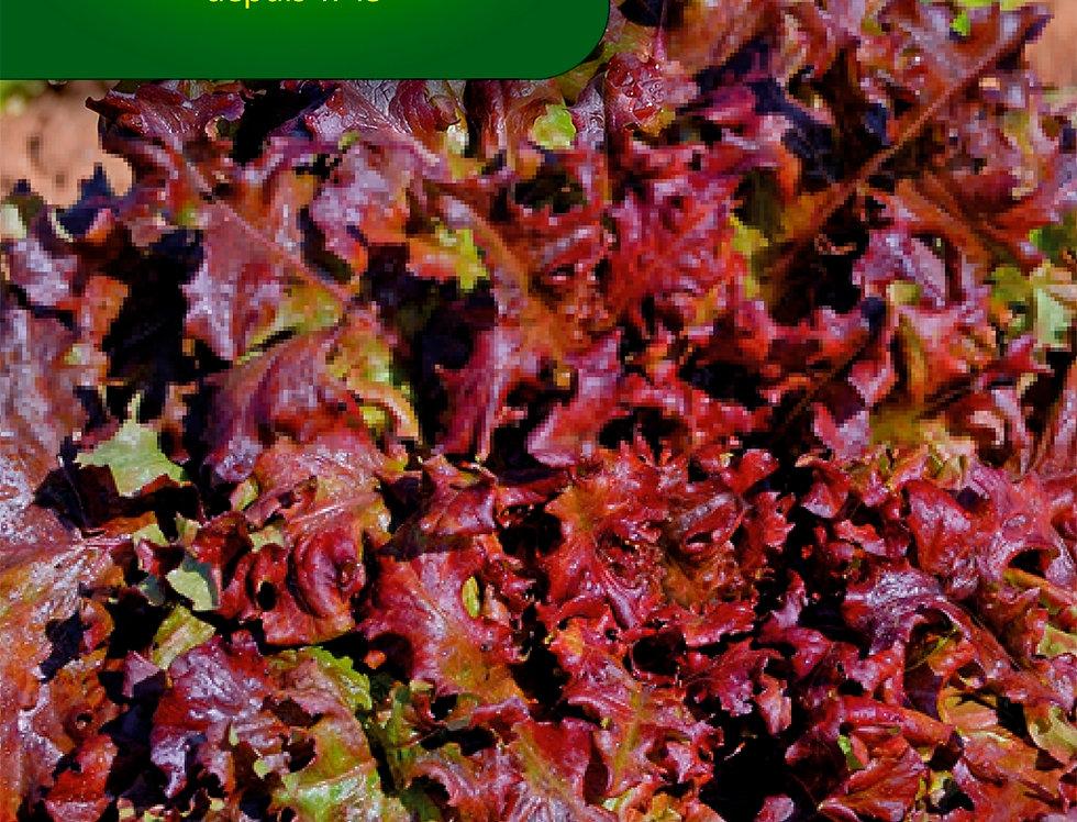 Eikenbladsla Rode salad bowl