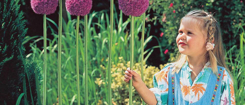 Allium Gigantheum