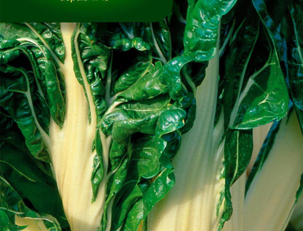 Snijbiet groene witribbige 3