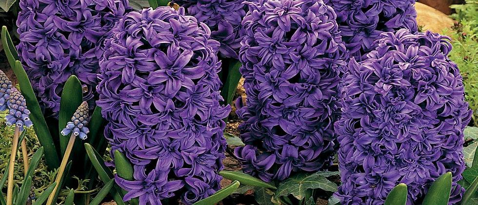 Hyacint Marie