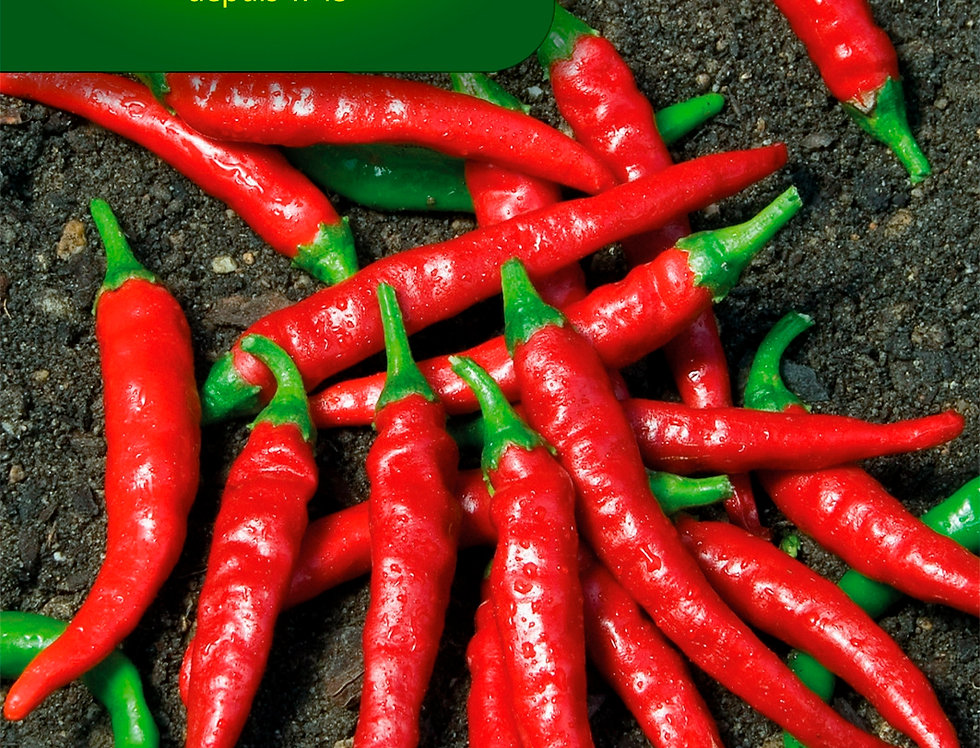 Spaanse peper Cayenne