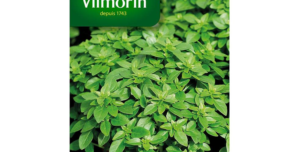 Basilicum fijnbladige