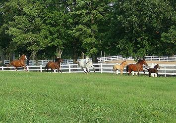 Vinyl Fences | Vinyl Horse, Privacy, Picket Fence | Gardner Fence