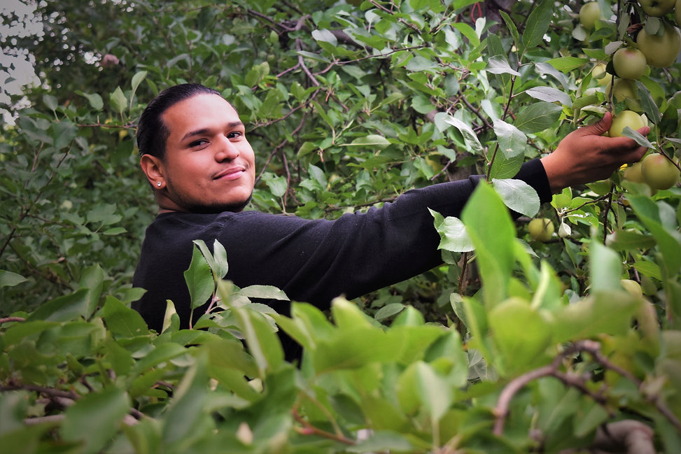 hispanic-young-man-picking-apples-in-an-