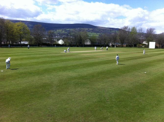 cricket page image.jpg