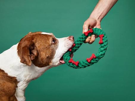 Holiday Hoopla and Doggy Health Hazards