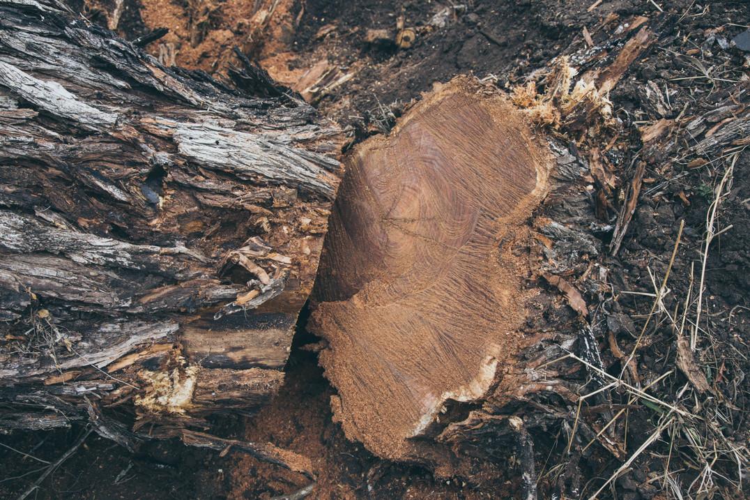 Hardwood-Design-Company-wide-plank-hardwood-flooring-wooden-flooring-texas-mesquite-hardwood-flooring-random-width-hardwood-floors-salvaged-wood-flooring-manufacturer
