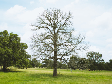 HOW WE BEGAN OUR UNEXPECTED SUSTAINABLE JOURNEY | SALVAGING TEXAS HARDWOOD | HARDWOOD DESIGN CO.