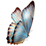 blue-butterfly.png