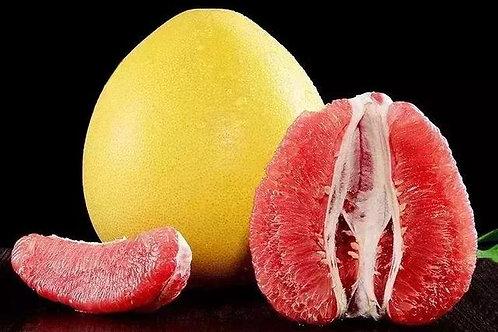 马家柚 MAJIA Pomelo