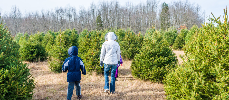 Top 10 Cut-Your-Own Christmas Tree Spots in NJ