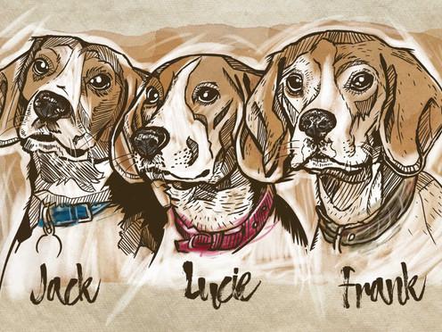 JACK, LUCIE & FRANK