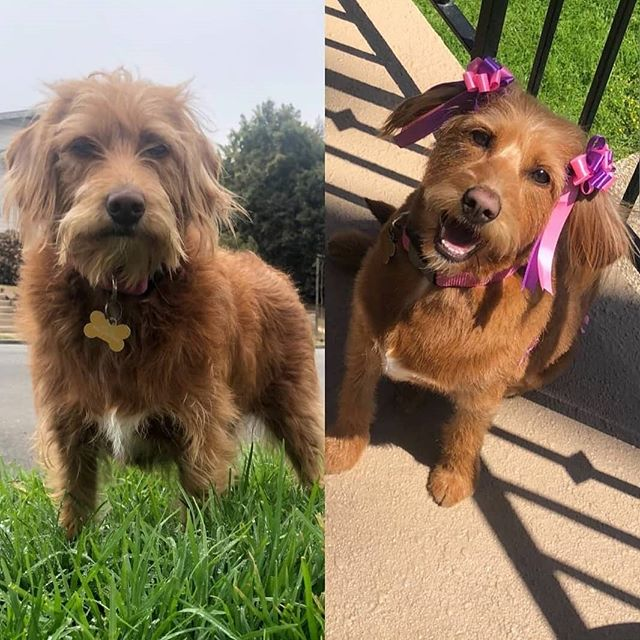 Beautiful girl and her before & after sh