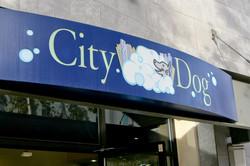 City Dog POI-4.jpg