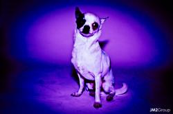 Indigo City Dog -111.jpg