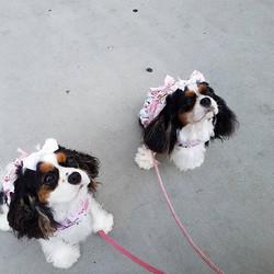 Such pretty girls! Mini & Gigi 💗 . .