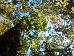 i boschi vicino alla Locanda