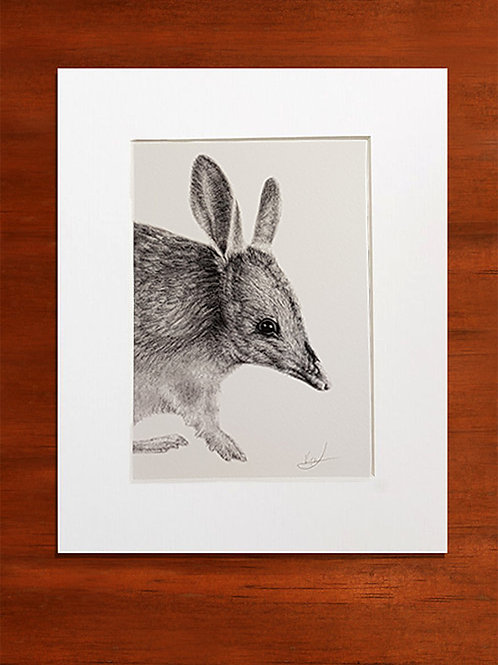 Easter Bilby Mounted Print
