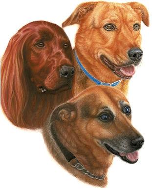3 Dogs3.jpg