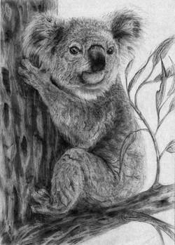 koalabw2