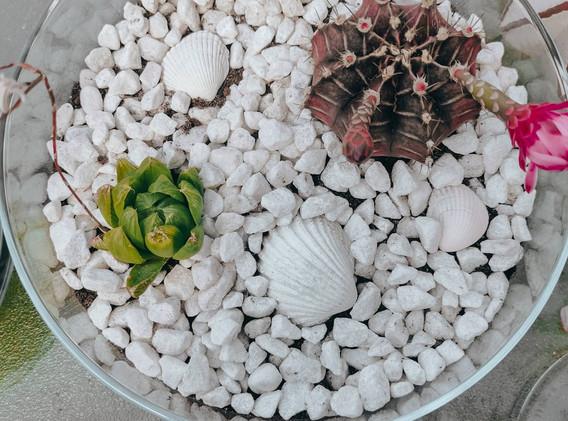 My Indoor Garden