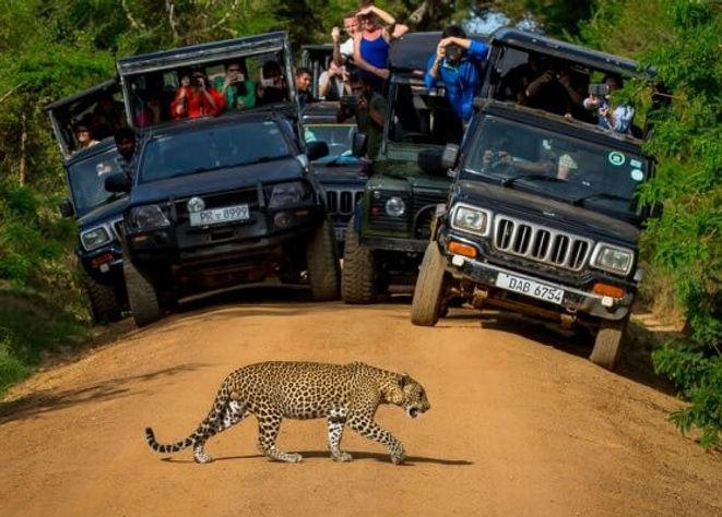 yala national park.jpg