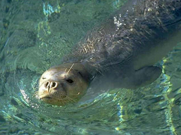 Uproar in Greece as mascot seal killed in protected area