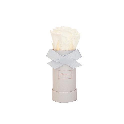 PEARL WHITE Infinity Rosen in MINI Flowerbox