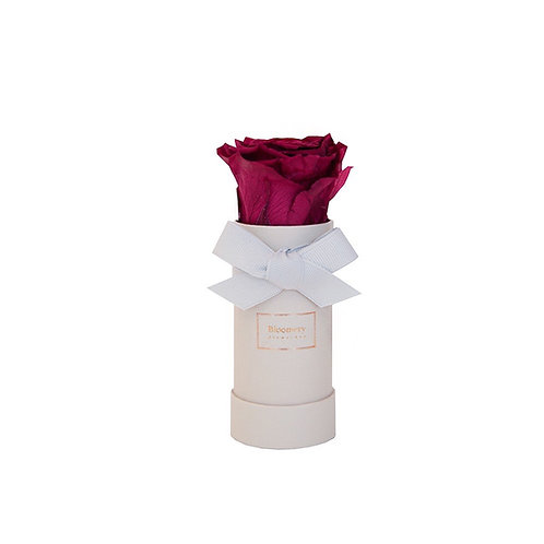 VELVET PLUM Infinity Rosen in MINI Flowerbox
