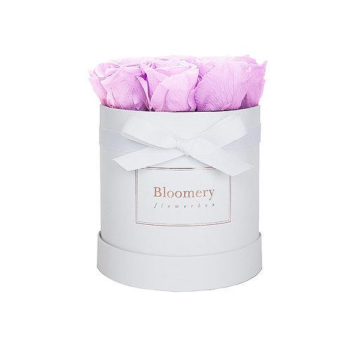BABY LILA Infinity Rosen in MEDIUM Flowerbox
