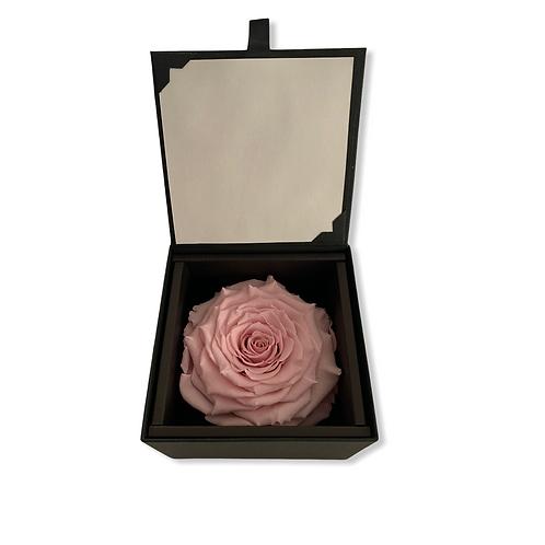 Solitär Infinityrose Bridal Pink