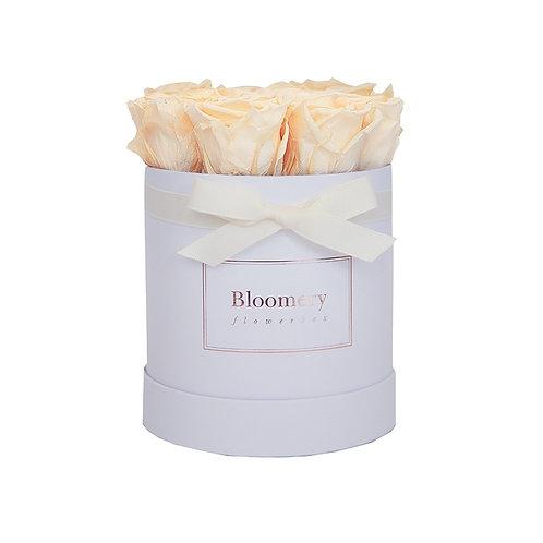 CHAMPAGNE Infinity Rosen MEDIUM Flowerbox