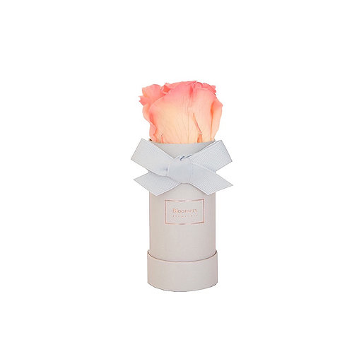 PINK CHAMPAGNE Infinity Rosen in MINI Flowerbox
