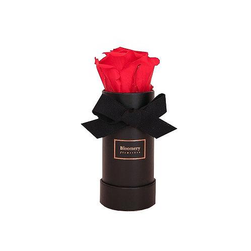 ORANGE FLAME Infinity Rosen in MINI Flowerbox