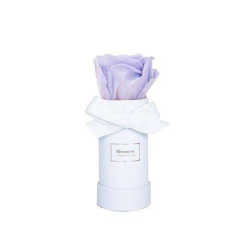 LAVENDEL BLUE Infinity Rosen in MINI Flowerbox