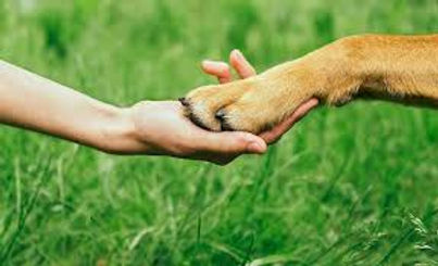 doghumanconnectionpg.jpg