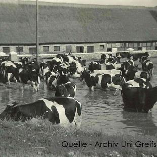 08-W-UNI-ARCH-09-Kühe-im-Gutshausteich-m