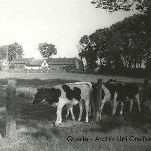 08-W-UNI-ARCH-07-Kühe-auf-Weide