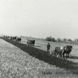 08-W-UNI-ARCH-19-Neun-Pferdegespanne