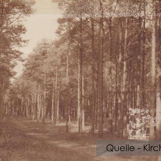 07-W-KI-01-Föhren-im-Wampener-Wald