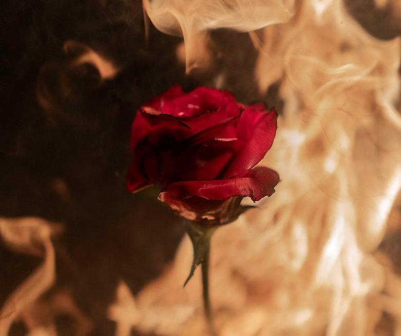 rose 1.4.jpg