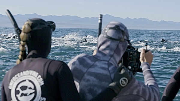 Apex  spotting dolphins.jpg