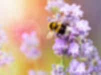 AdobeStock_85746198.jpeg