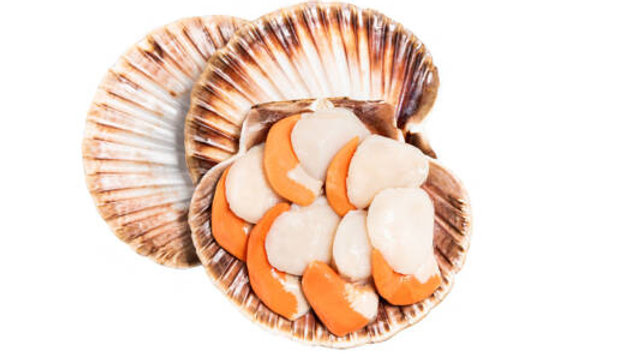 Dunmanus Bay Scallop