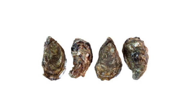 Dunmanus Oysters