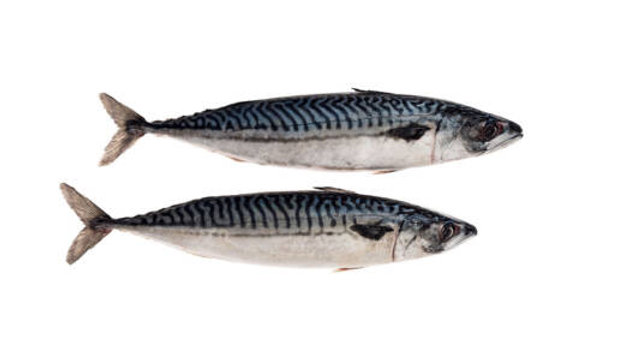 Whole Atlantic Mackerel