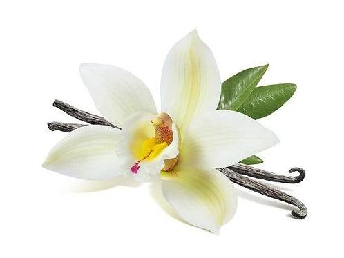 Vanilla Fragrances