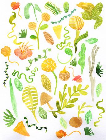 spring_botanicals_Yanuary_Navarro_2020