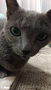 猫 留守番 福岡