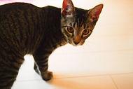 猫 キャットシッター 女性 福岡